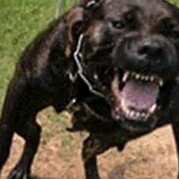 Dog-Owners-Beware